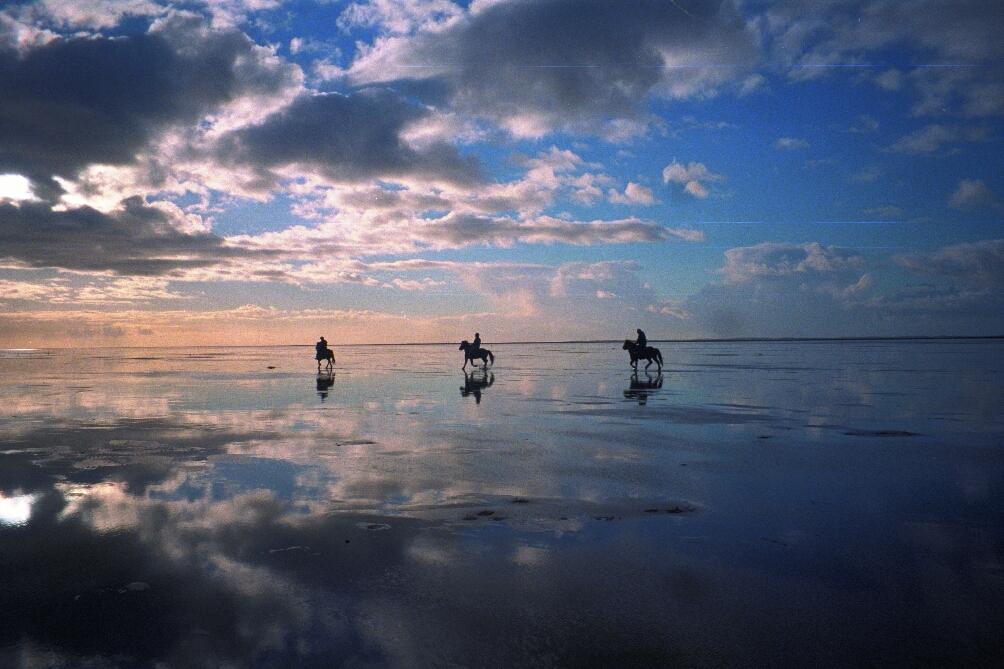 paarden op strand in Denemarken
