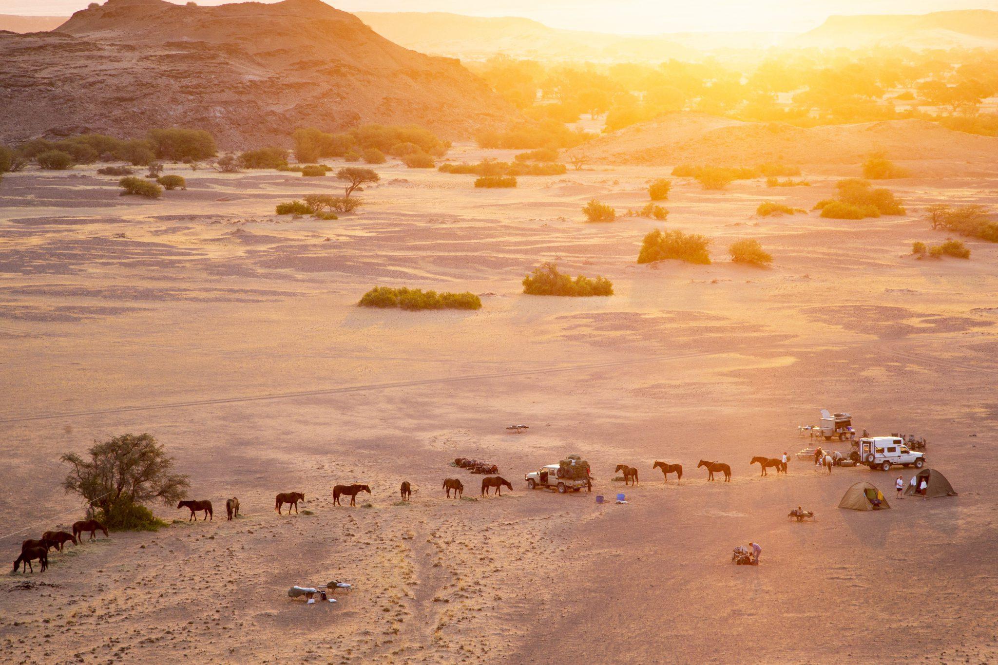 Paarden in de woestijn bij zonsondergang