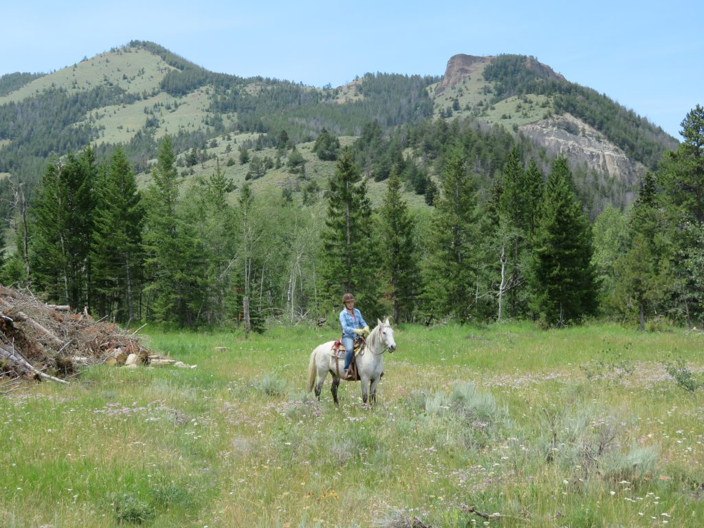 Paard en ruiter tijdens ranchvakantie