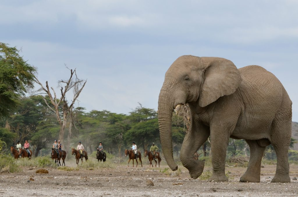 Olifanten op safari te paard in Afrika