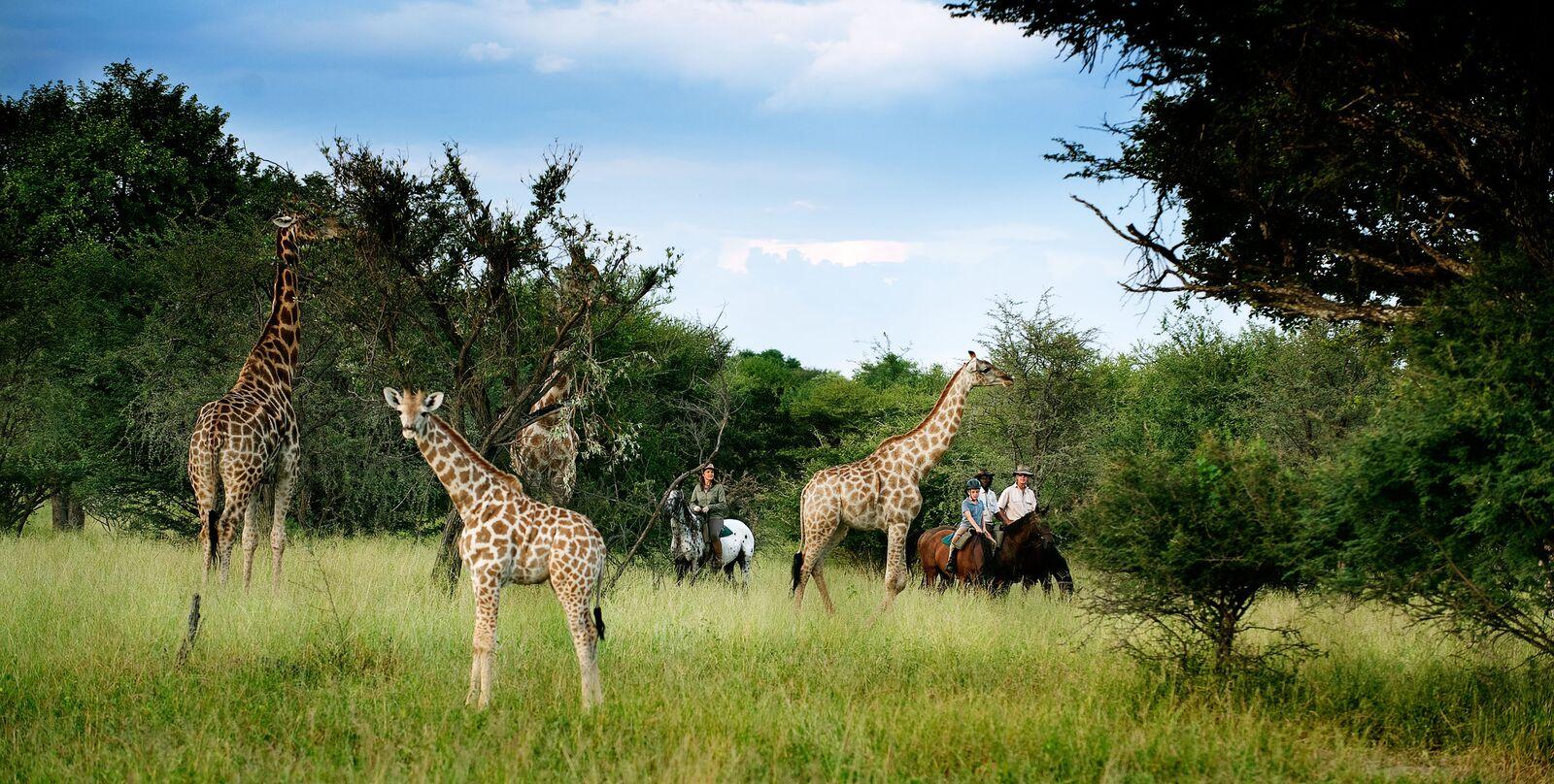 Beginners op een safari te paard in Afrika