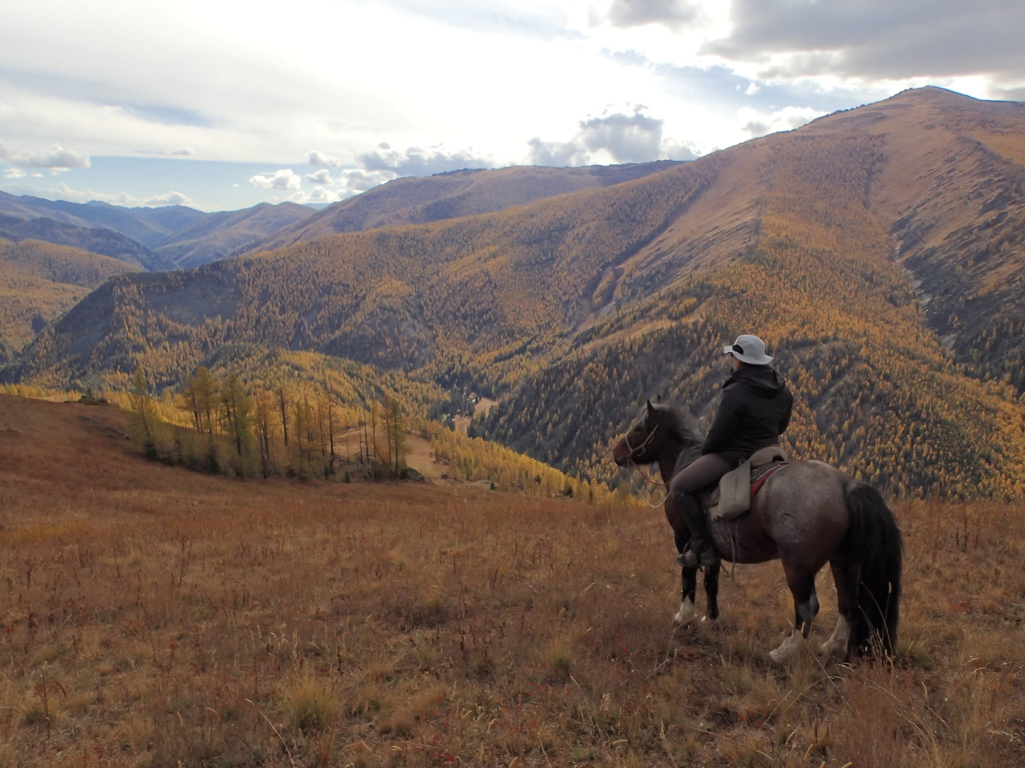 Paard in de bergen Mongolië