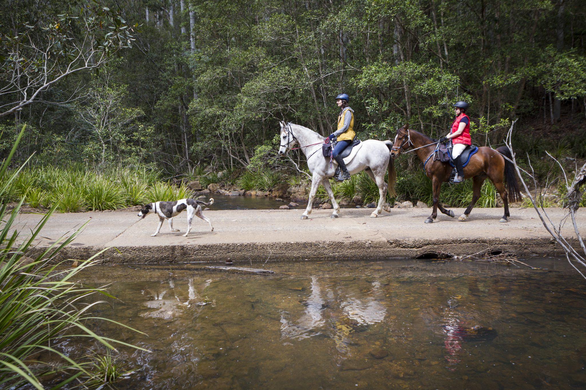 Ruiters met hond in Australië