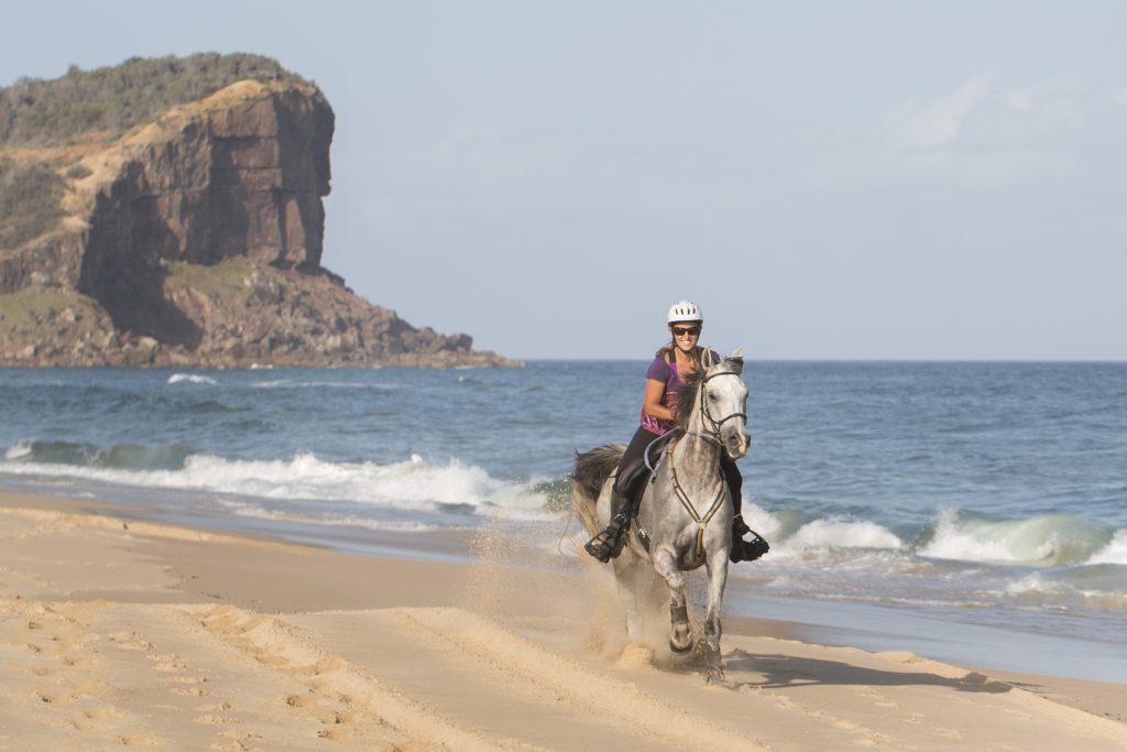 Paard in galop op strand