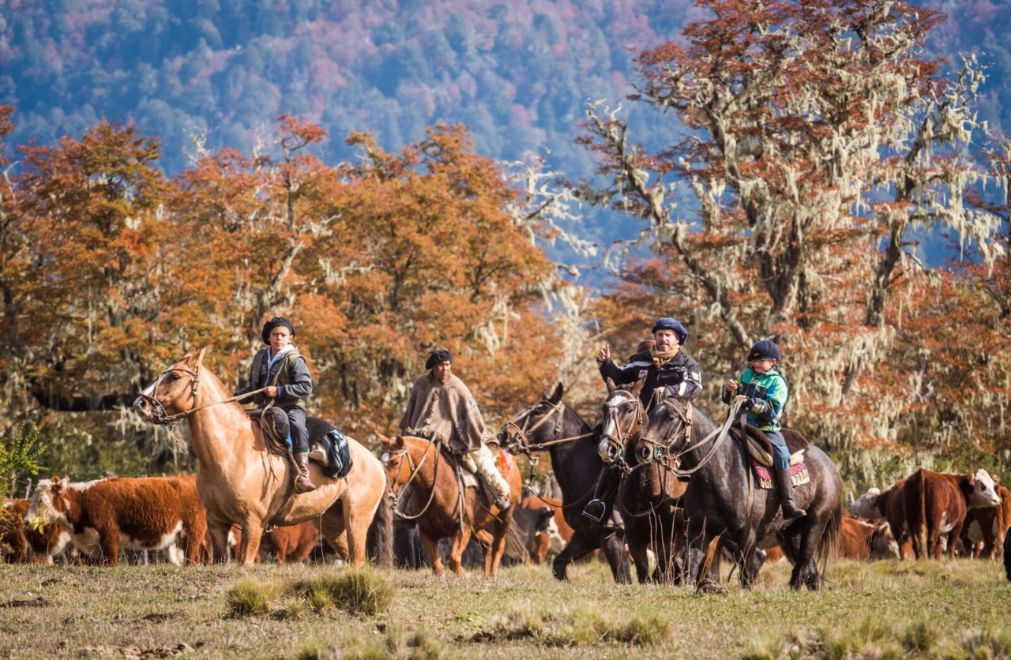 Cowboy's met vee op een Argentijnse ranch
