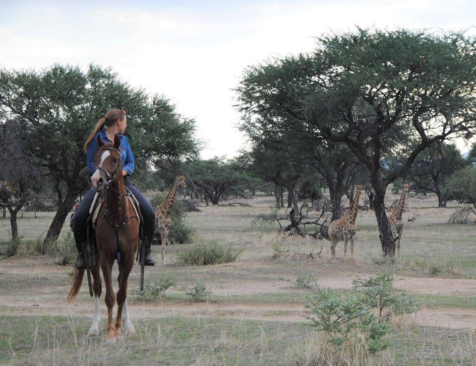 Paard en ruiter met giraffes tijdens een endurance vakantie