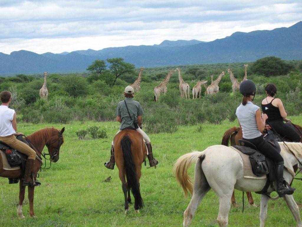 Giraffes op een safari te paard in Afrika