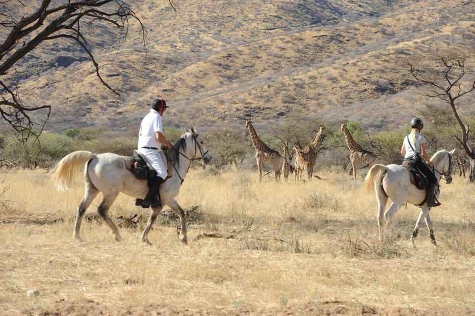 Paardrijden met giraffes in Afrika