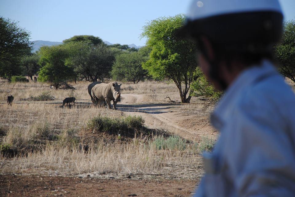 Neushoorn en ruiter tijdens een endurance vakantie