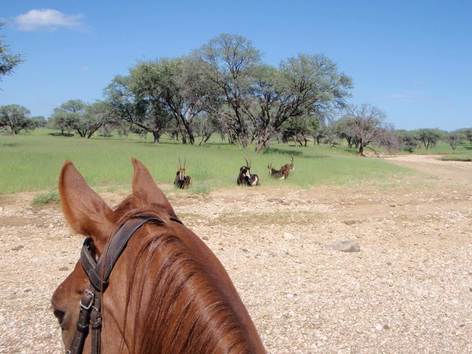 Safari te paard in Namibië