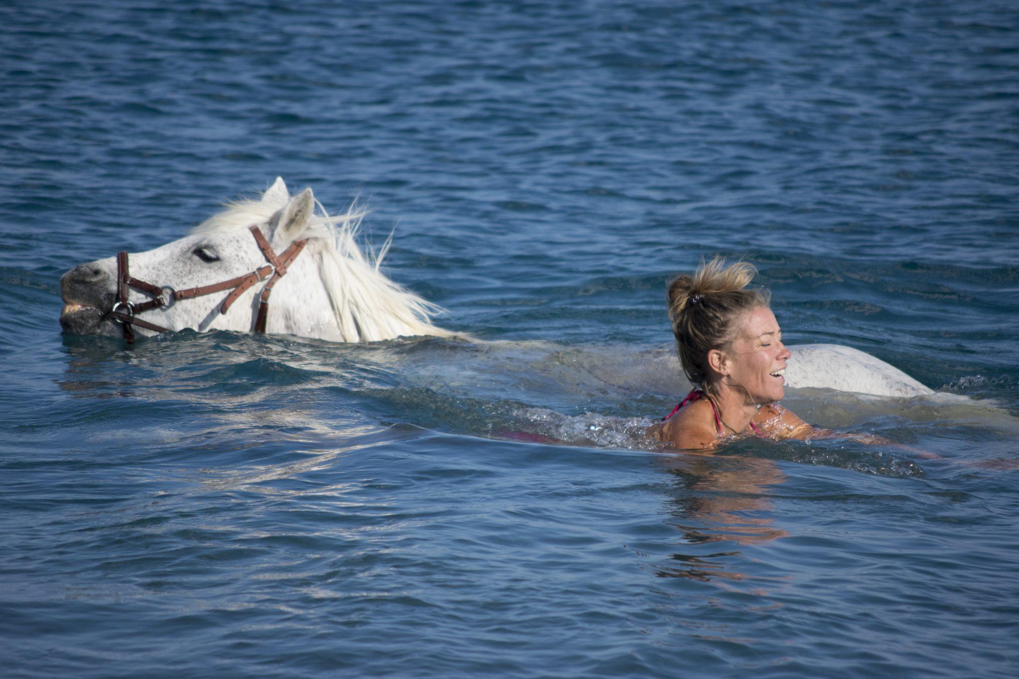 Zwemmen met paard Griekenland