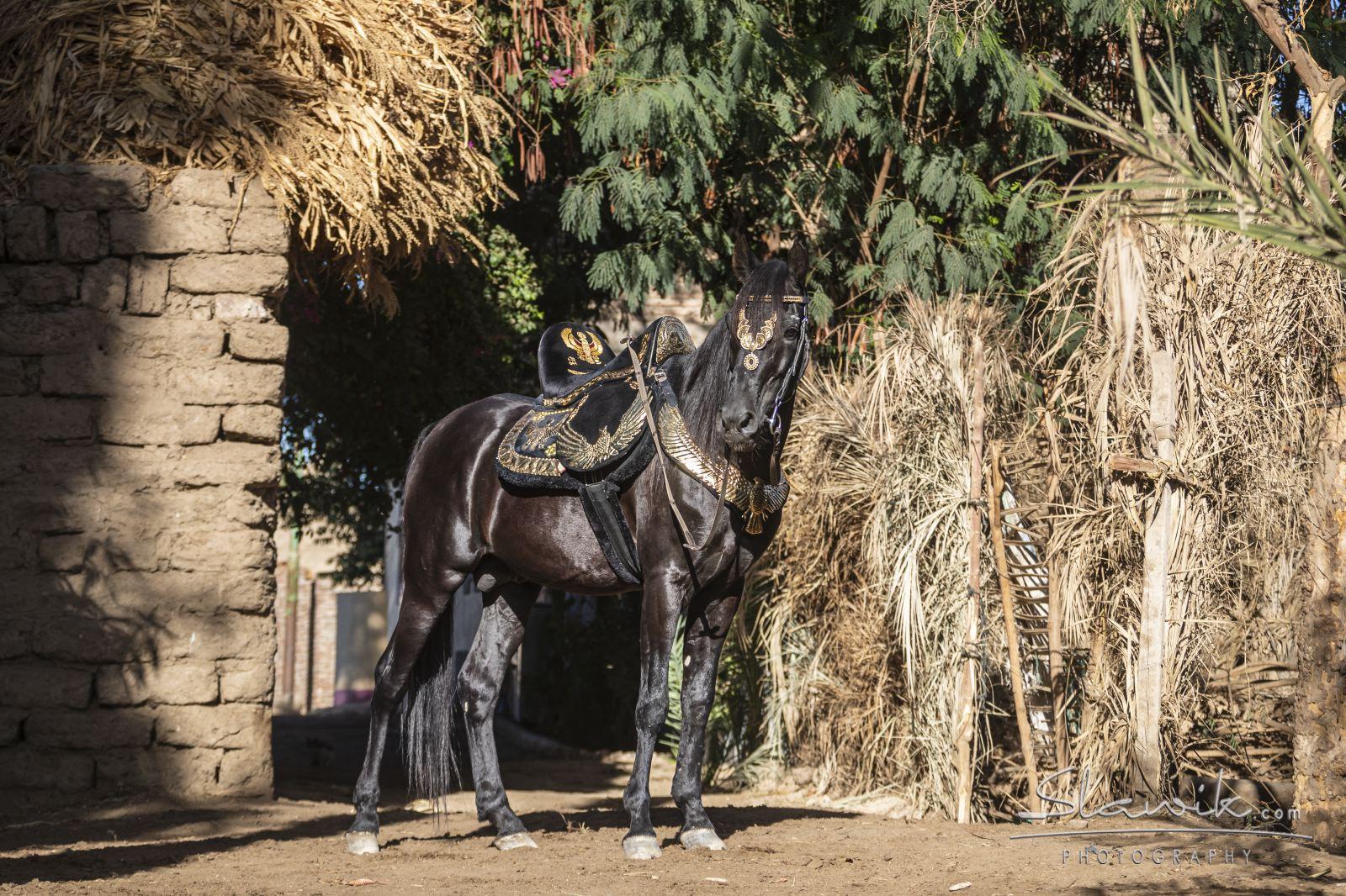 Vakantie met paarden Egypte