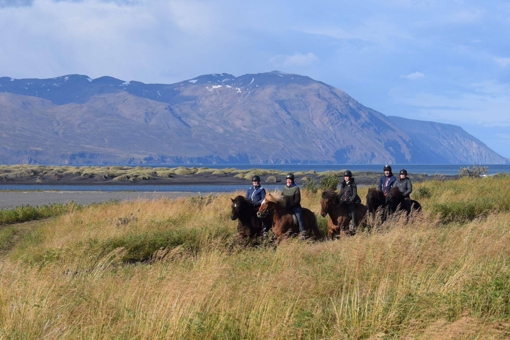 Vakantie met paarden op IJsland