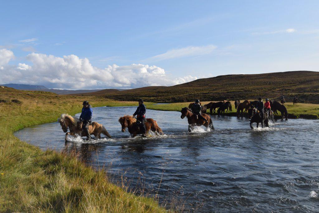 Rivier oversteken met IJslandse paarden