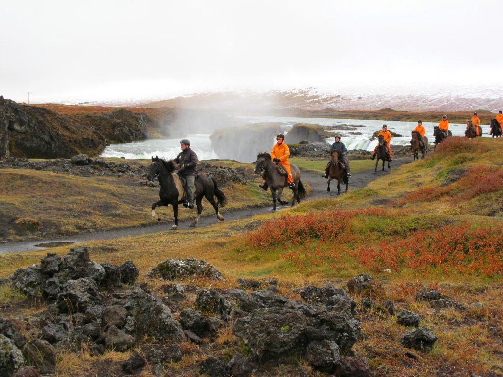 Tölten op IJslanders tijdens een ruiterreis