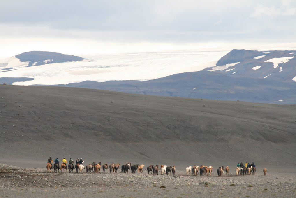 Paardrijvakantie op IJslandse paarden
