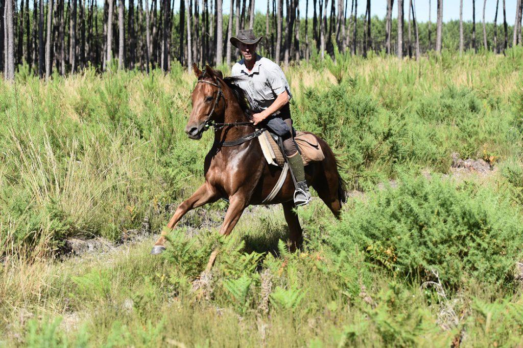 Galopperend paard op ruitervakantie in Frankrijk