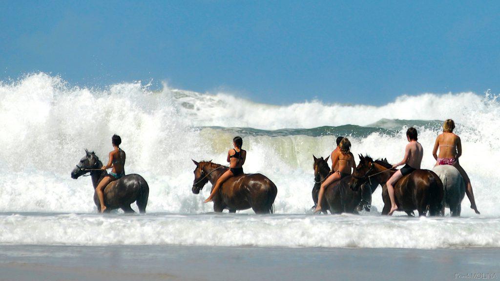 Zwemmen met paard in de zee in Frankrijk