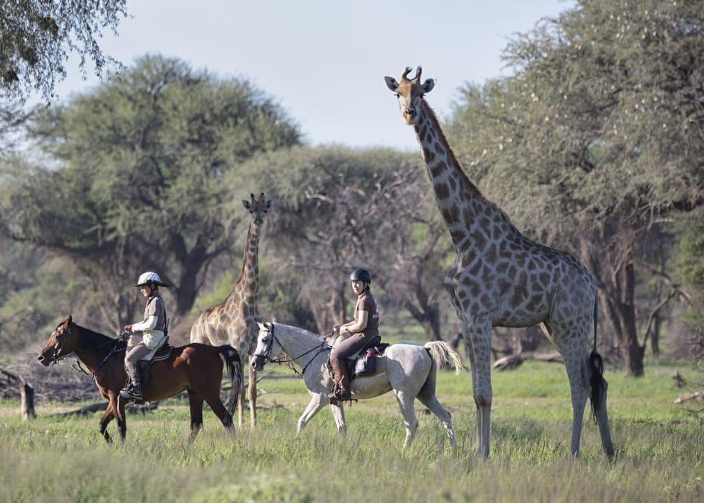 Paarden en giraffe op safari